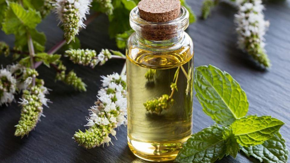 Essential-Oils_686325610-Madeleine-Steinbach-1024x683.jpg