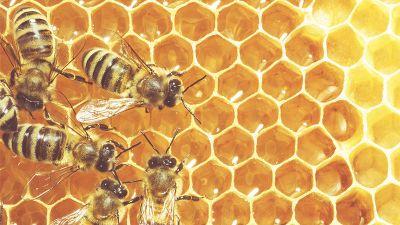 bee-winery-inside.jpg