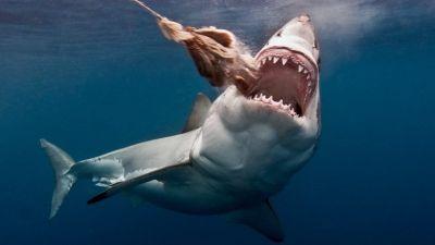 deadliest-dangerous-animals-800x416.jpg