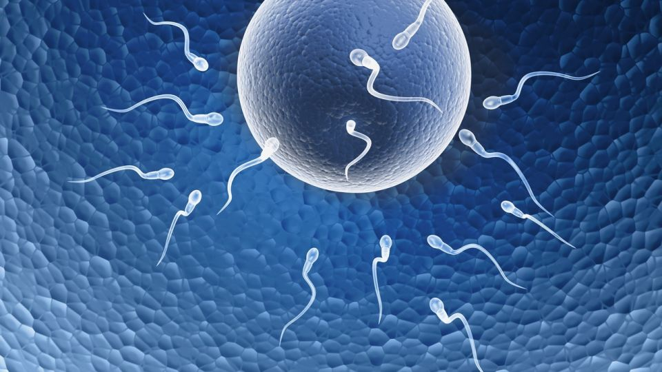 fertility-chart.jpg