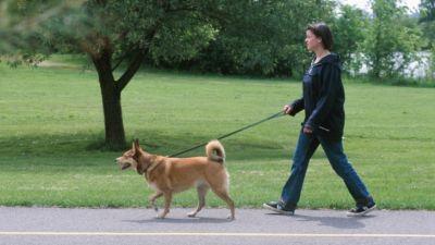 walkingthedog2.jpg